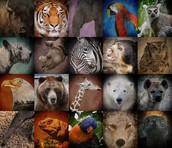 Mas animales en peligro