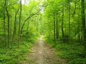 hoosier forest