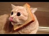 Breadface Cat Corp.