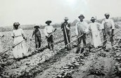 The Sharecropping Life
