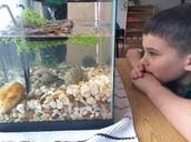 Kid looking at fish