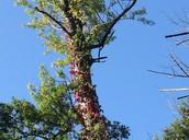 A very tall tree