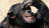Turns Out Chimpanzees Really Don't Like Drones