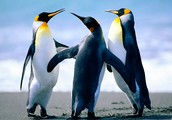 We dance better than penguins!