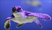 Mad turtle