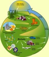 Biofeul Cycle