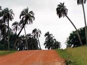 Recorrido en el Parque nacional El Palmar