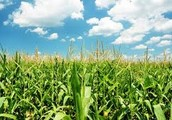 What is biomass?