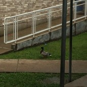 Welcome to Marcus - Quack up your trash!