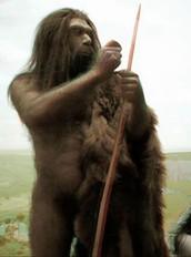 Homo del neandertal