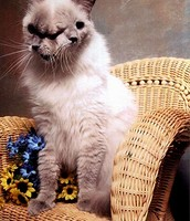 JANUS CATS