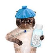Hoe kunt u merken dat uw kat ziek is!
