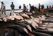 SE Asia fishing