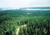 The Coniferous Forest.