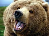 Timmy the Bear