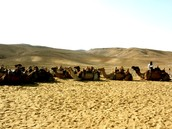 Camel Rides in the Judean Desert