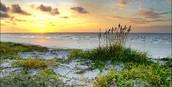 Coastal Plain Habitat