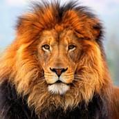 האריה-מידע