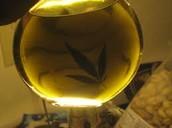 aceite de hachís