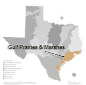 Map how to get to the gulf coast prairie & marshes.