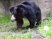 Sloth Bear Zoo