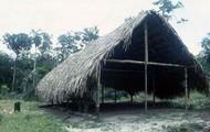 An Amazonian Shelter