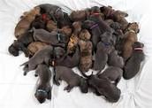 """""""Doggy Pile!!!!!"""""""