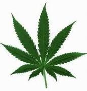 Marijuana (The plant symbol)