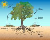 """Tree Plantation."" TREE PLANTATION. N.p., n.d. Web. 03 May 2016."