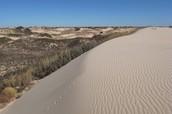 Sandhill soil  (found in North Carolina)