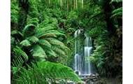 Swagland Forrest