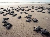 So! Many! Turtles!