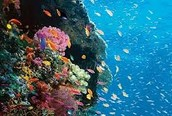 The Beautiful Reef