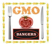 Are there any disadvantages to Genetically Modified Plants?