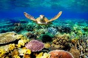 The Great Barrier Reef under water!!!!  : )