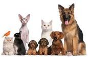 Oleg's Pet Shop sells the best pets in town!