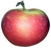 Apple Exploration!