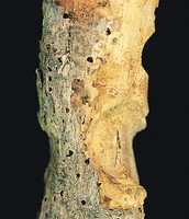 Tree After Attack