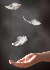 Feather-Haiku