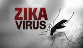 Why has the Zika Virus spread so quickly?