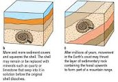 How is a fossil made?