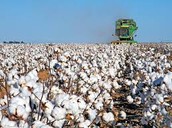 cotton farming in the modern age