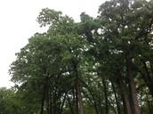 Autotroph: Tree