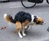 Excremento de Perro