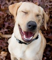 Happy Lab