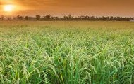 delta fields