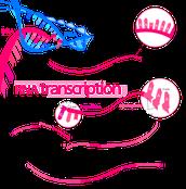 What is Transcription?