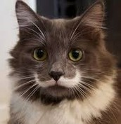 We want to see your mustache!