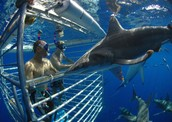 CAGE SHARK DIVING!!!!!!!