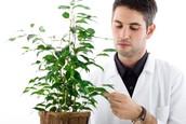 Plant Botanist